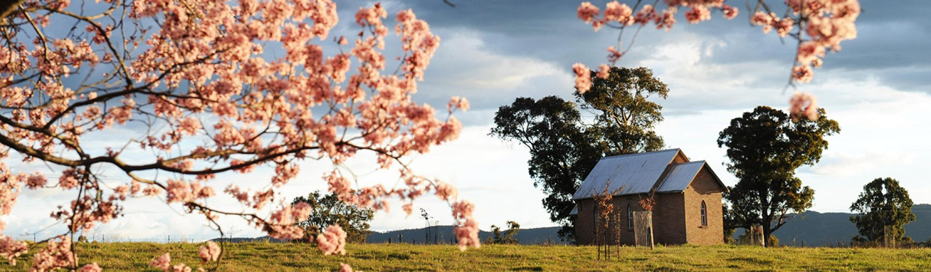 Blossoms in the Mudgee region, Country NSW