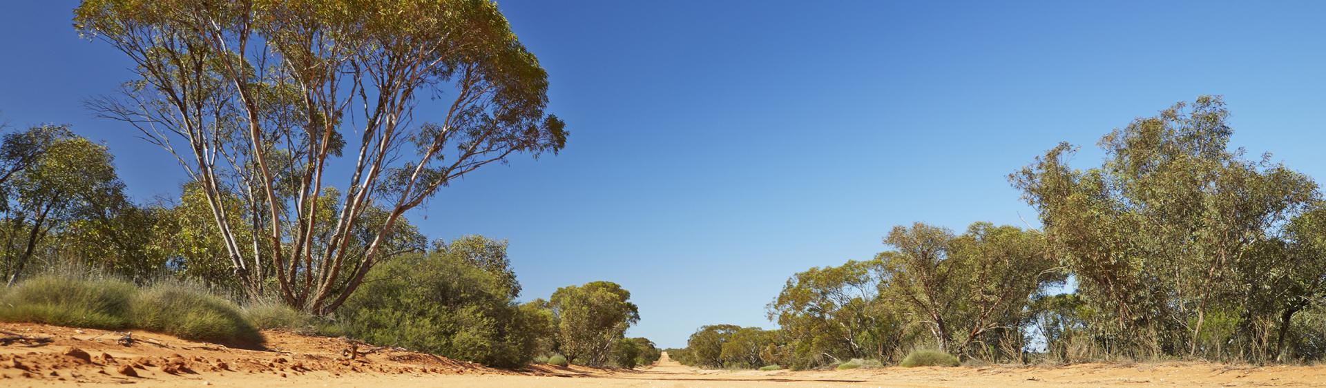 Mungo National Park track, Broken Hill